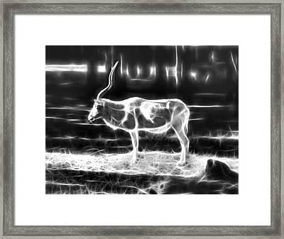 Addax Spirit Of The Desert Framed Print