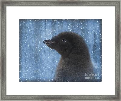 Adelie Winter Magic... Framed Print by Nina Stavlund