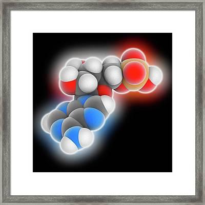 Adenosine Monophosphate Molecule Framed Print by Laguna Design