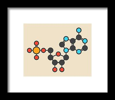 Adenosine Triphosphate Framed Prints