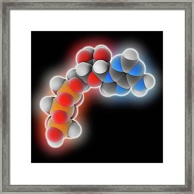 Adenosine Triphosphate Molecule Framed Print by Laguna Design