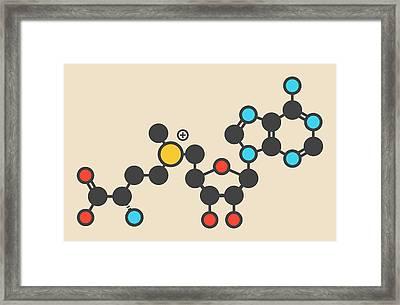 Adenosyl Methionine Molecule Framed Print