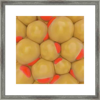 Adipose Tissue Framed Print by Science Photo Library