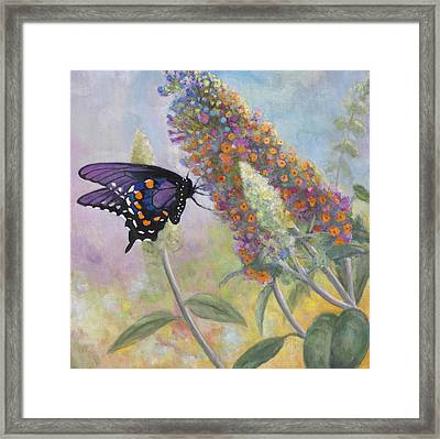 Admiral Butterfly Framed Print by John Zaccheo