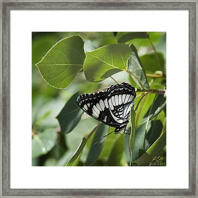Admiral Framed Print by Kenneth Hadlock
