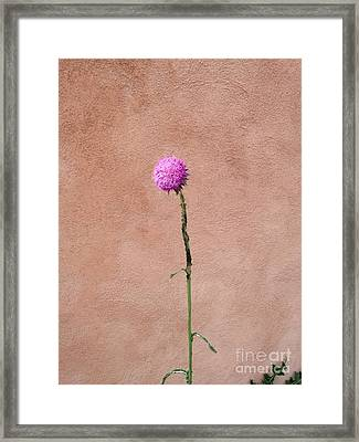 Adobe  Framed Print by Polly Anna