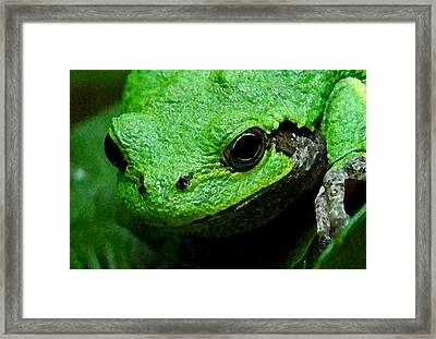 Adorable And Sticky Framed Print by Marcia Pockat