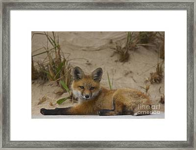 Adorable Baby Fox Framed Print