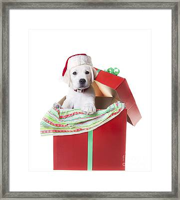 Adorable Christmas Puppy  Framed Print by Diane Diederich