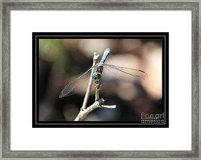 Adorable Dragonfly With Border Framed Print by Carol Groenen