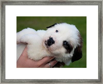 Adorable Hand Full Framed Print by Mechala  Matthews