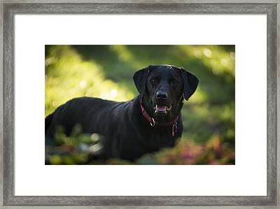 Adorable Framed Print by Phil Abrams