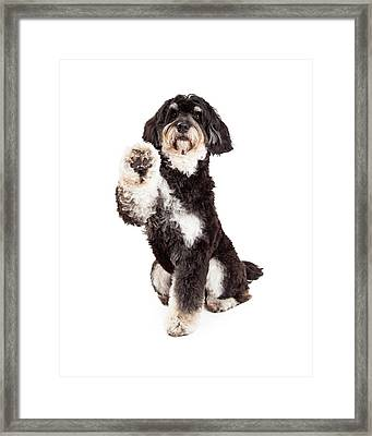 Adorable Poodle Mix Breed Dog Extending Paw Framed Print by Susan Schmitz