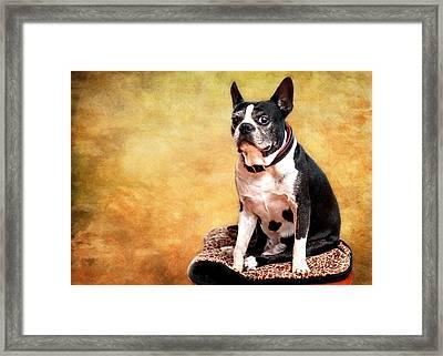 Adorable Pug Andiamo Framed Print by Vicki Jauron