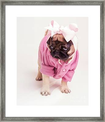 Adorable Pug Puppy In Pink Bow And Sweater Framed Print by Edward Fielding
