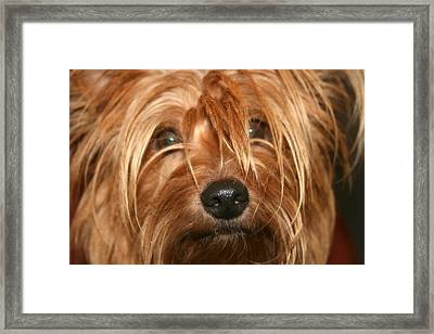 Adoring Eyes Framed Print by Kathy Peltomaa Lewis