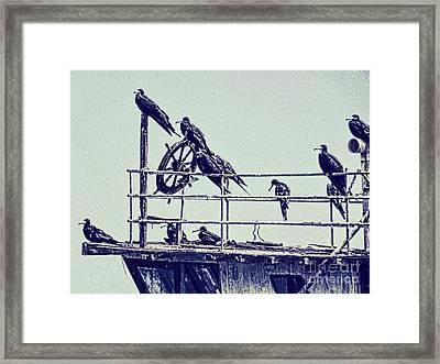 Adrift Framed Print by Julia Springer