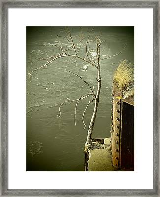 Adversity Framed Print by Thomas Young