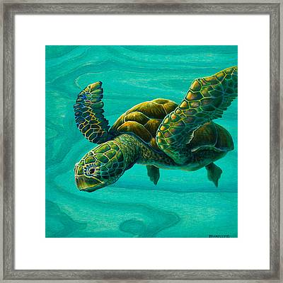 Aeko Sea Turtle Framed Print by Emily Brantley