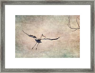 Aerial Ballet Framed Print by Dale Kincaid