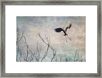 Aerial Dance Framed Print by Dale Kincaid