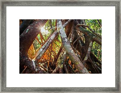 Aerial Tree Roots Framed Print by Alex Hyde