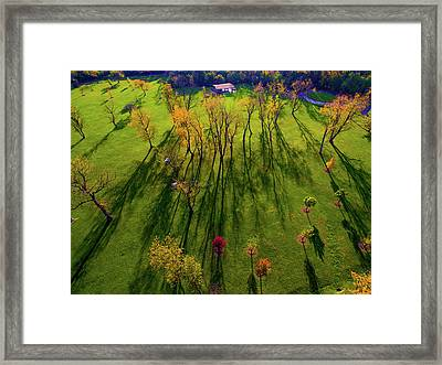 Aerial View Of Autumn Trees, Forest Framed Print