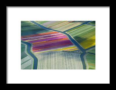 Keukenhof Framed Prints
