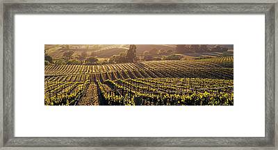 Aerial View Of Rows Crop In A Vineyard Framed Print by Panoramic Images