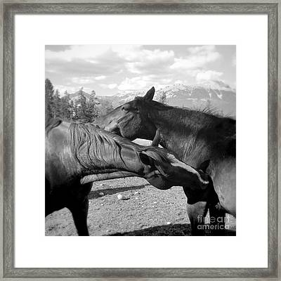 Affection Two Horses Framed Print
