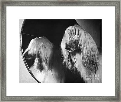 Afghan Hound Framed Print by ME Browning