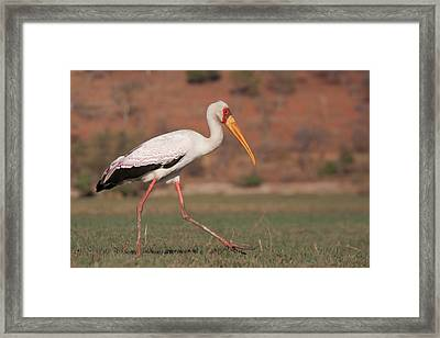 Africa, Botswana, Chobe National Park Framed Print by Jaynes Gallery