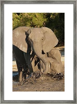 Africa, Botswana, Chobe National Park Framed Print by Joe and Mary Ann Mcdonald