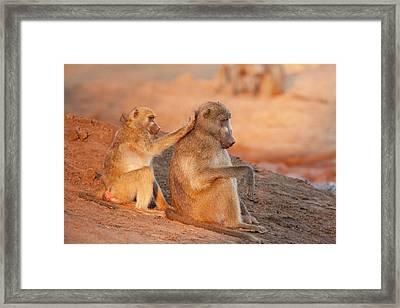 Africa, Botswana, Senyati Safari Camp Framed Print
