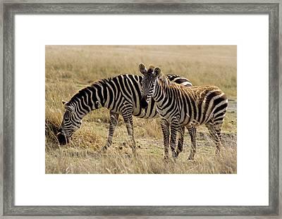 Africa, East Africa, Tanzania Framed Print by Kymri Wilt