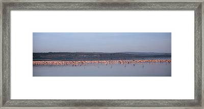 Africa, Kenya, Lake Nakuru National Framed Print