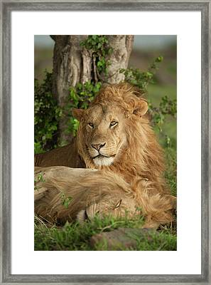 Africa, Kenya, Masai Mara Game Reserve Framed Print by Joe and Mary Ann Mcdonald