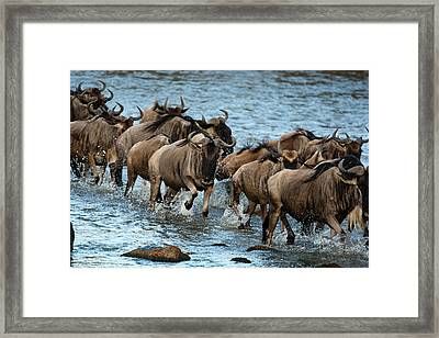 Africa, Kenya, Masai Mara Gr, Mara Framed Print by Joe and Mary Ann Mcdonald