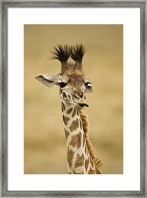 Africa, Kenya, Masai Mara Gr, Upper Framed Print by Joe and Mary Ann Mcdonald