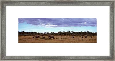 Africa, Kenya, Masai Mara National Framed Print by Panoramic Images
