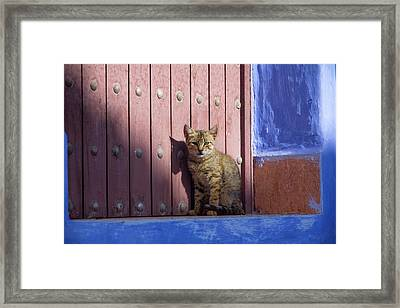 Africa, Morocco, Chechaouen, Domestic Framed Print