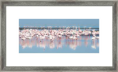 Africa, Namibia, Walvis Bay Framed Print by Jaynes Gallery