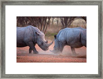 Africa, Namibia White Rhinos Fighting Framed Print by Jaynes Gallery
