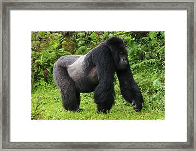 Africa, Rwanda, Akarevuro, A Mountain Framed Print by Ralph H. Bendjebar