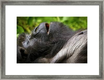 Africa, Rwanda, Juvenile Mountain Framed Print by Ralph H. Bendjebar