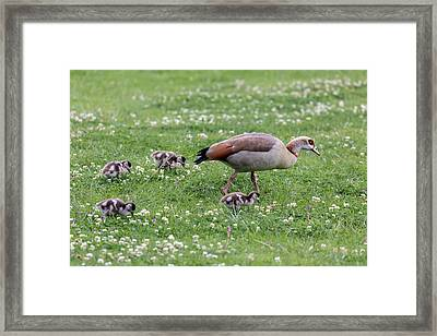 Africa, South Africa, Cape Town Framed Print by Jaynes Gallery
