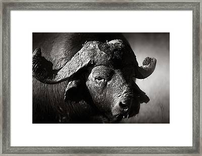 African Buffalo Bull Close-up Framed Print by Johan Swanepoel
