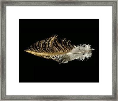 African Crowned Crane Framed Print by Chris Maynard
