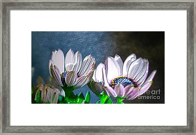 African Daisy Detail Framed Print by Donna Brown