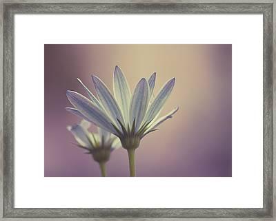 African Daisy II Framed Print by Rani Meenagh